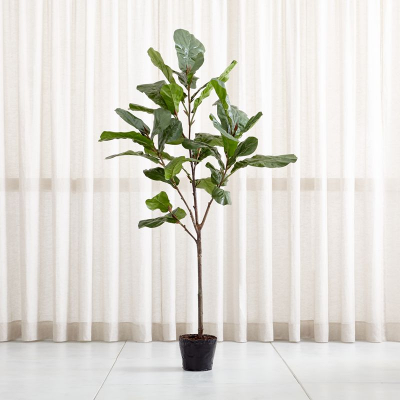 Faux 7 Fiddle Leaf Fig Tree Reviews Crate And Barrel