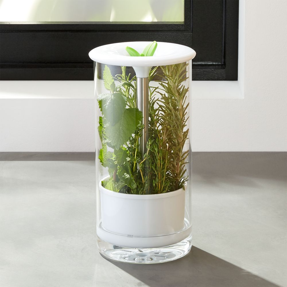 Glass Herb Keeper - Crate and Barrel