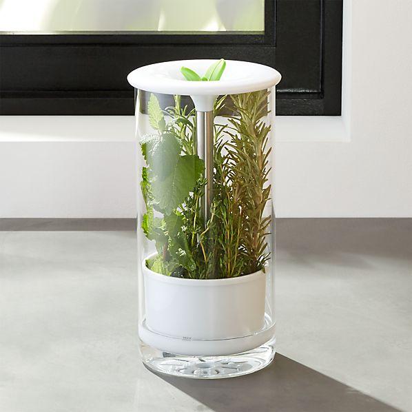 Glass Herb Keeper