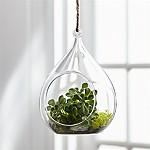 Glass Round Hanging Planter