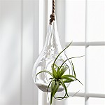 Glass Teardrop Hanging Planter