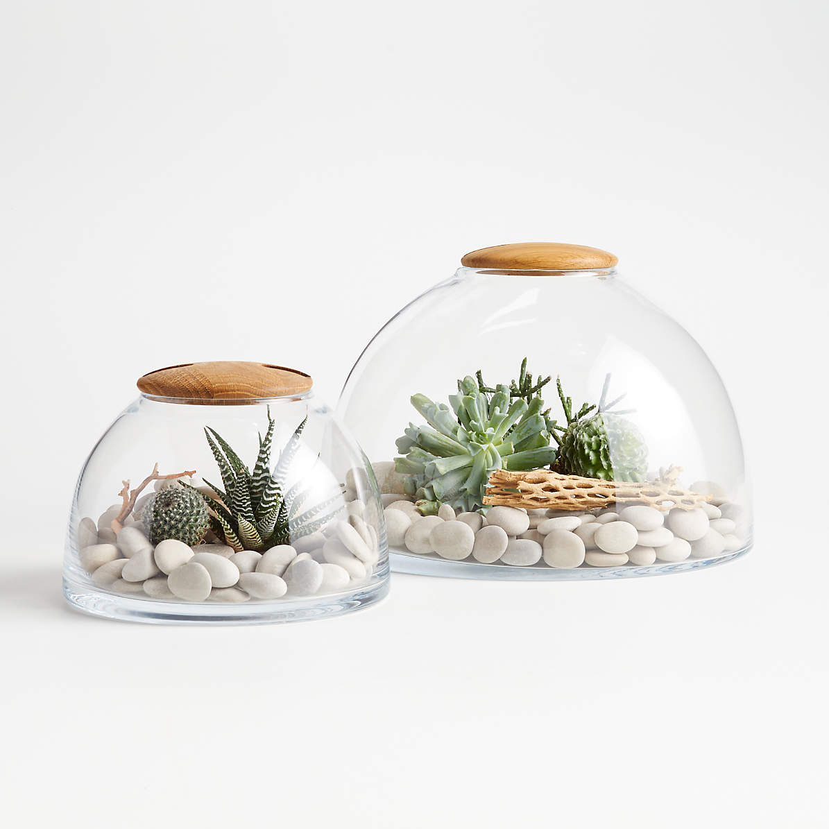 Glass Terrarium With Wood Lid Crate And Barrel