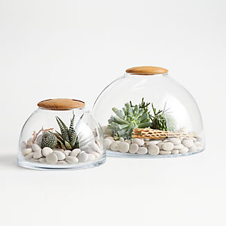 Glass Terrarium with Wood Lid