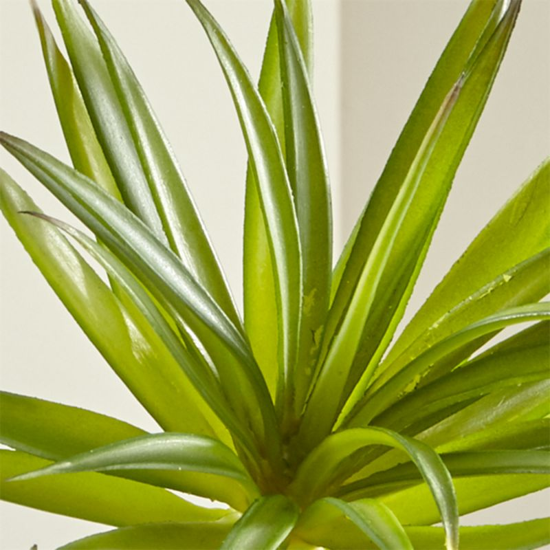 Green Yucca Succulent Stem Reviews Crate And Barrel