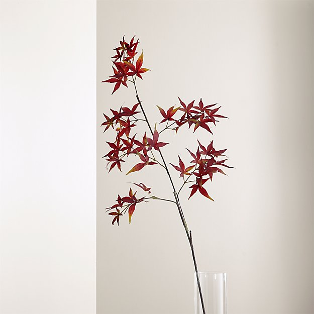 Japanese Maple Stem