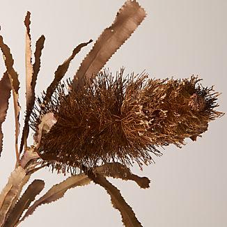 Leucadendron Stem