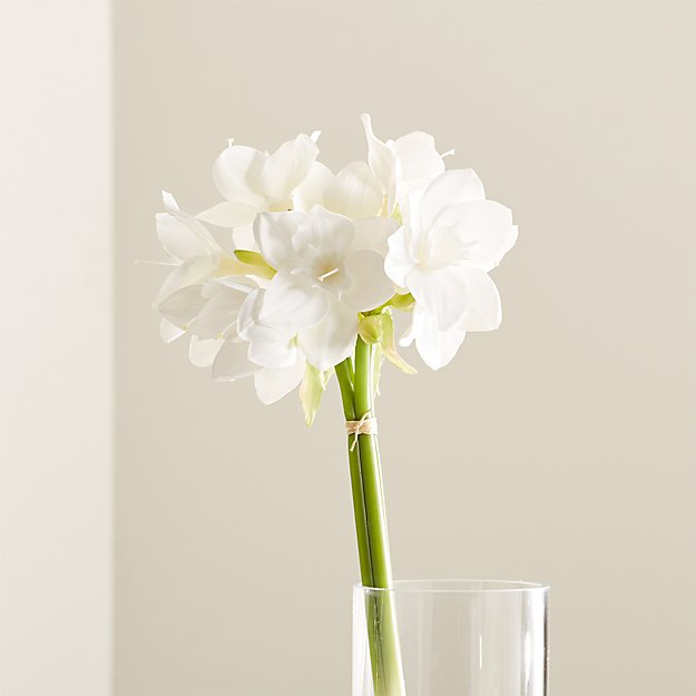 Amazon Lily Flowers