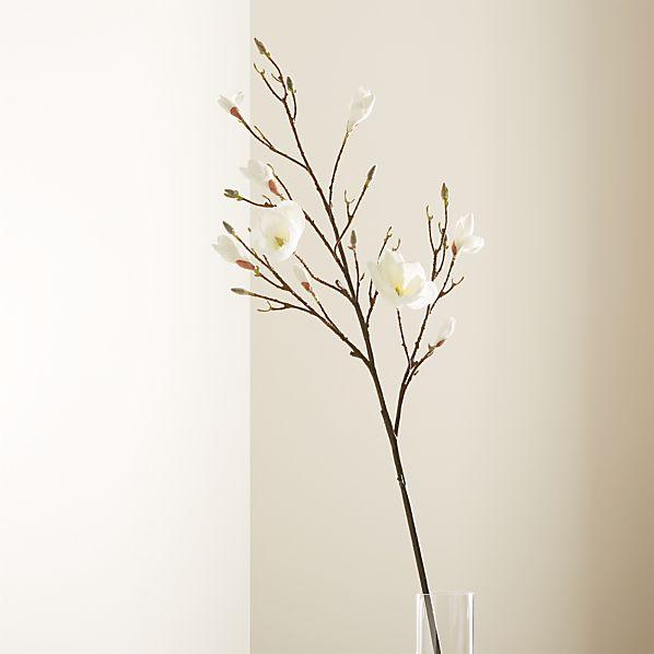 Magnolia Flower Branch