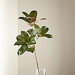 Magnolia Stem