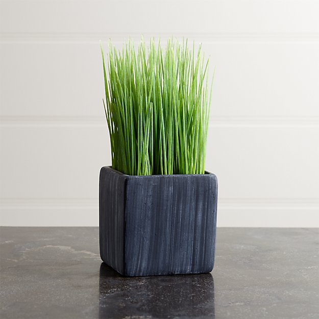 Mini Potted Grass Crate And Barrel