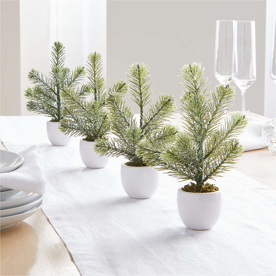 Viewing product image Potted Mini Pine Tree