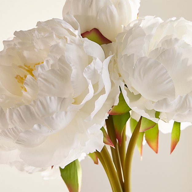 Faux white peonies reviews crate and barrel peonybunchwhiteshs17 shortclochesmallpottedfcje17 magnoliabrnchplmt24invsfc17 peonybunchwhites17 whitepeonyshortglassclocheblg17 mightylinksfo Image collections
