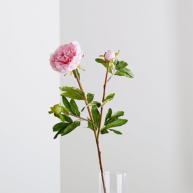 Pink Peony Flower Stem