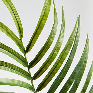Phoenix Palm Stem