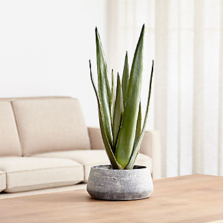 Faux Potted Agave