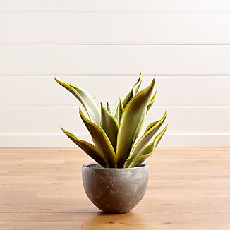 Large Potted Plant