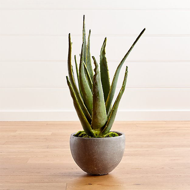 Aloe Vera Plant Crate And Barrel