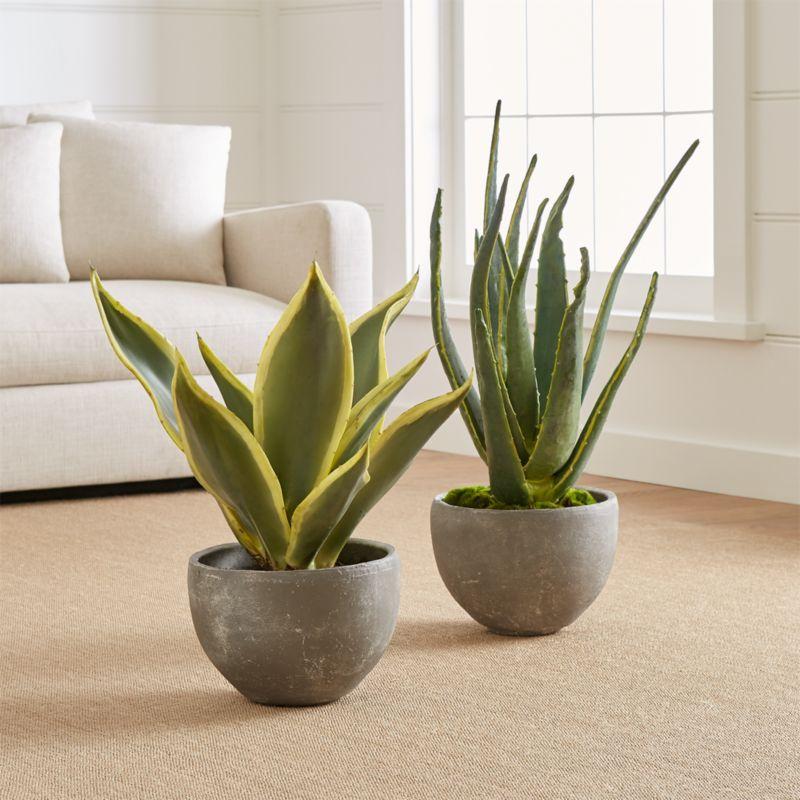 Online Designer Bedroom Aloe Vera Plant