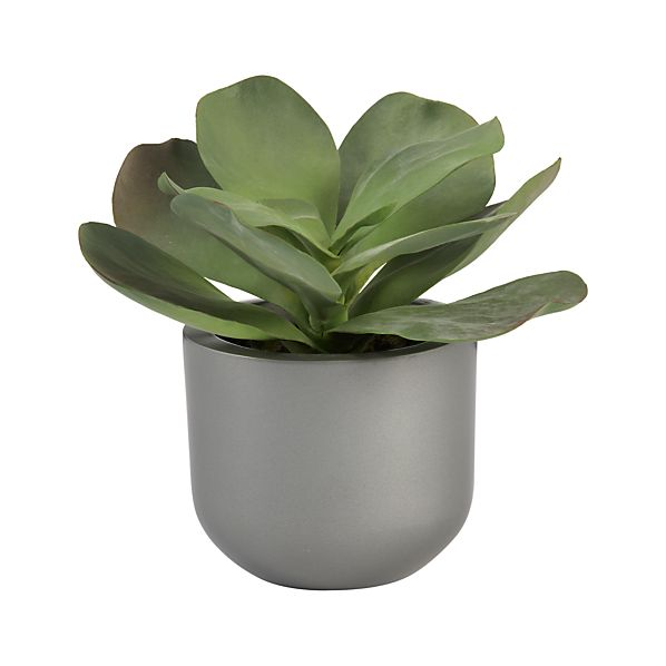 Potted Butterfly Succulent