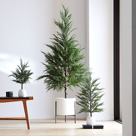 Potted Cypress Trees Crate And Barrel