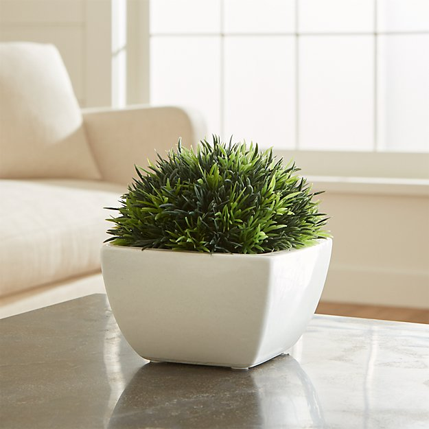 Potted Moss - Image 1 of 4