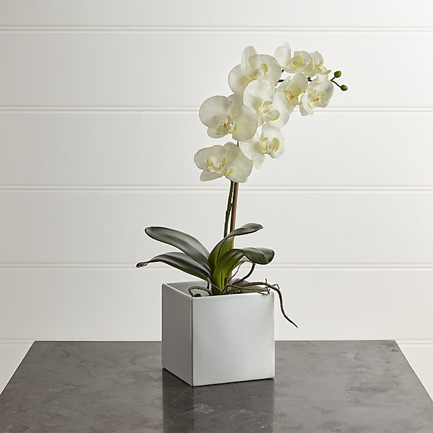 Large Potted Orchid Plant - Image 1 of 7