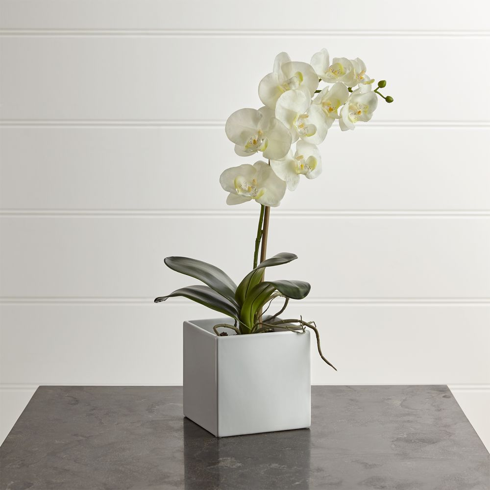 Online Designer Combined Living/Dining Large Potted Orchid Plant
