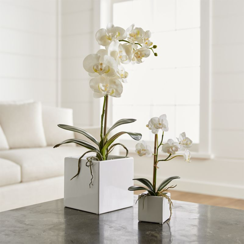Online Designer Living Room Large Potted Orchid Plant