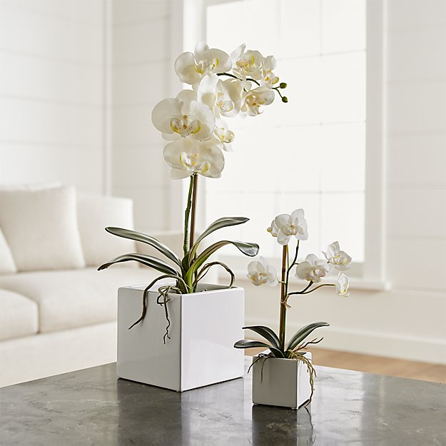 Faux Orchids | Crate and Barrel on bright home ideas, bright business ideas, rv parking ideas, bright colorful kitchen cabinets, bright painting ideas, bright kitchen colors, bright hallway ideas, bright light in face, vaulted ceilings ideas, bright porch ideas, bright kitchen schemes, bright painted kitchen cabinets, bright blue kitchen, bright sunroom ideas, bright kitchen backsplash, bright red backsplash, bright traditional kitchen, bright kitchen art, bright kitchen themes, bright garden ideas,