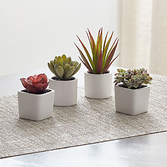 Mini Potted Succulents, Set of 4