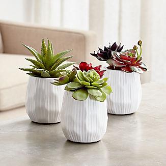 Potted Faux Succulent Plants