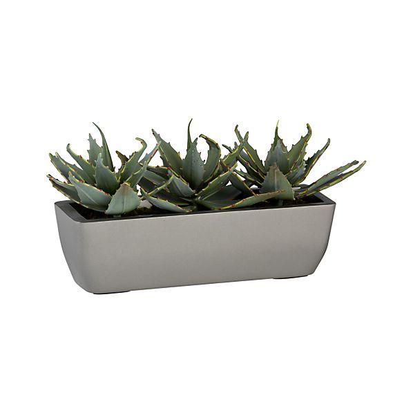 Potted Triple Aloe