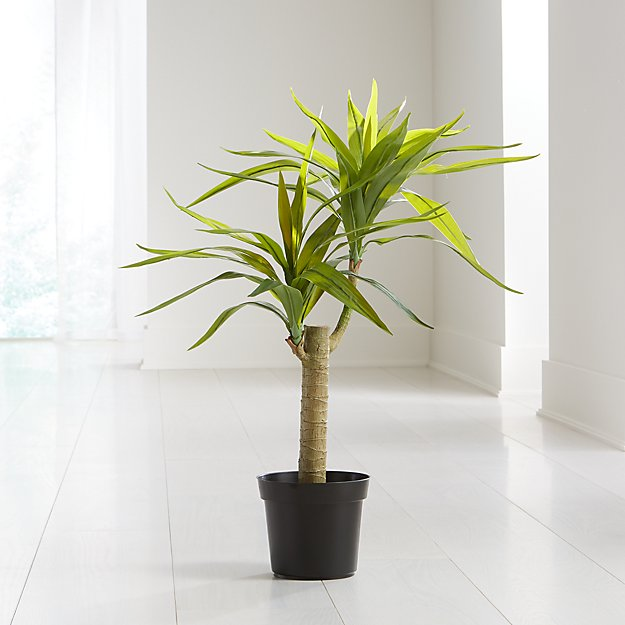 Potted Artificial Yucca - Image 1 of 3