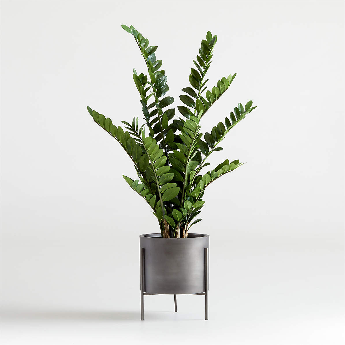 Artificial Potted Zz Plant Reviews Crate And Barrel