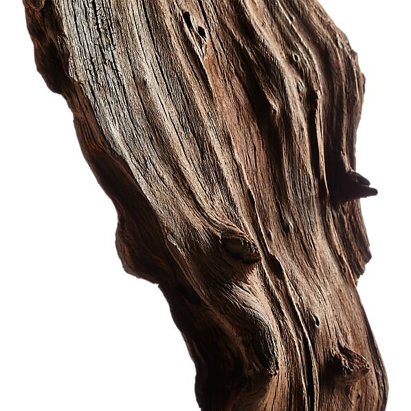 RootSculptrTalDriftwdAV2S17