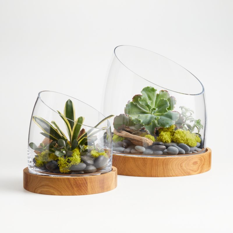 Slant Glass Terrarium With Wood Base Crate And Barrel