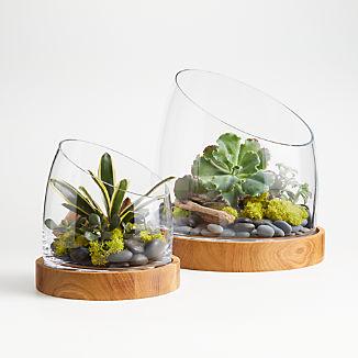 Slant Glass Terrarium with Wood Base