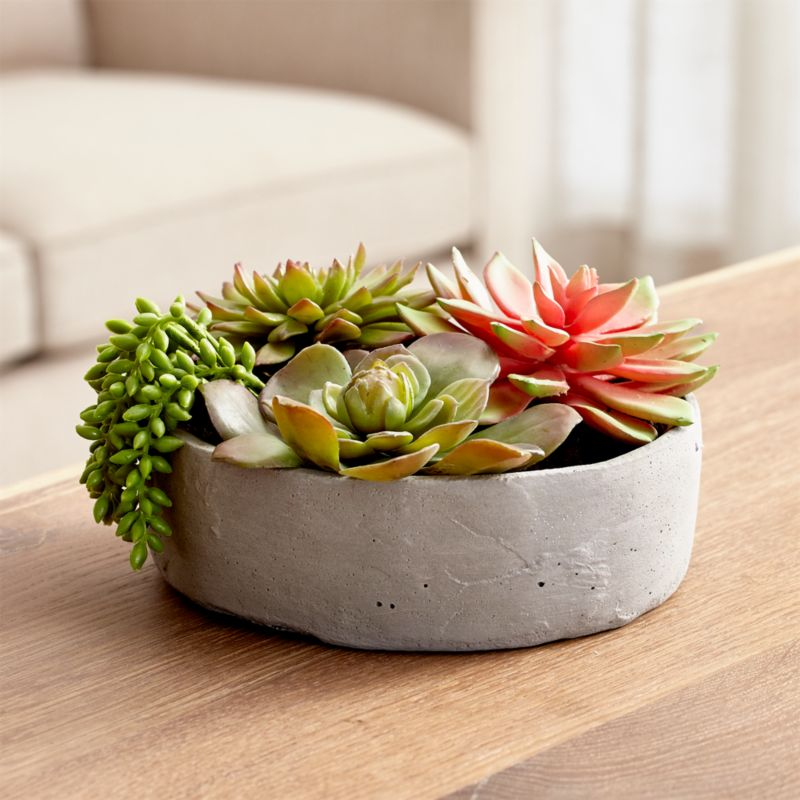 Faux Succulents In Low Round Pot Reviews Crate And Barrel