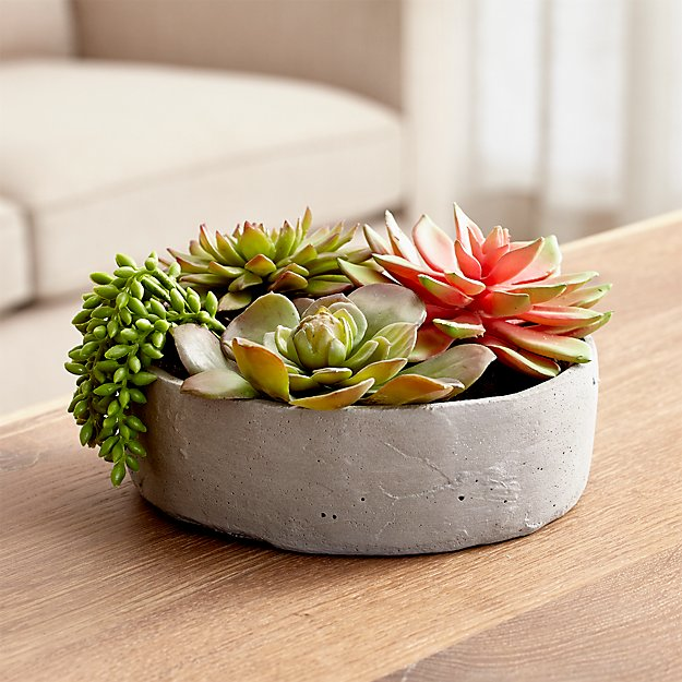 faux succulents in low round pot crate and barrel. Black Bedroom Furniture Sets. Home Design Ideas