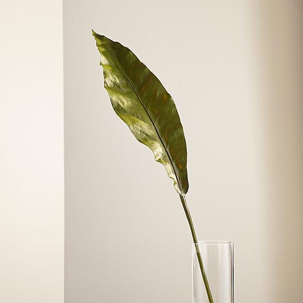 Taca Orchid Leaf