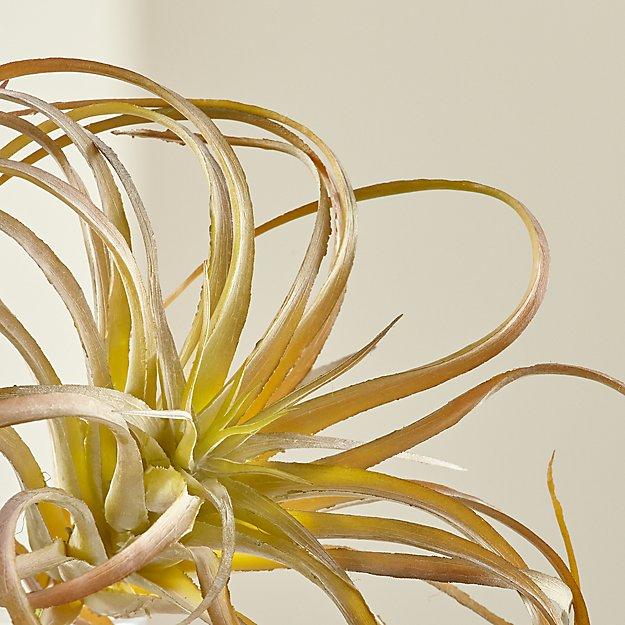 Tillandsia Curly Faux Succulent Stem - Image 1 of 7