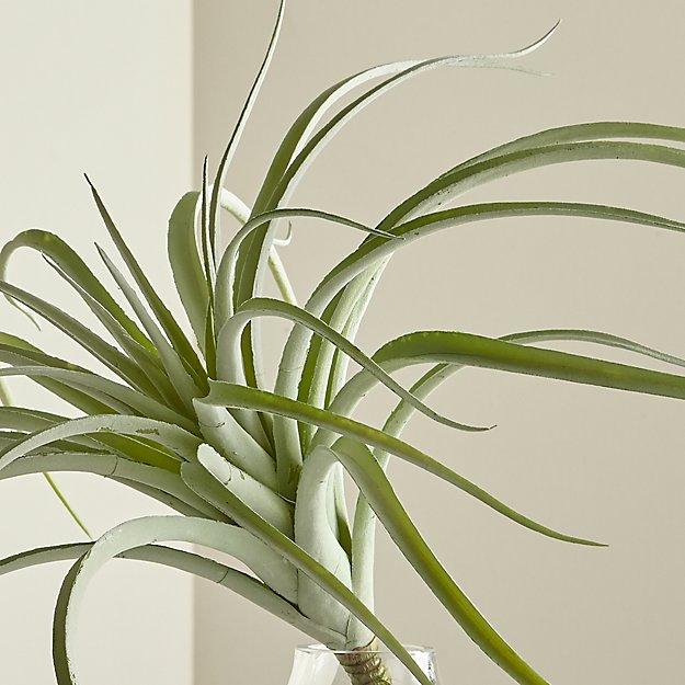 Tillandsia Grey Faux Succulent Stem - Image 1 of 7