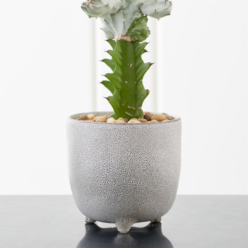 Vaquita Grey Footed Planter