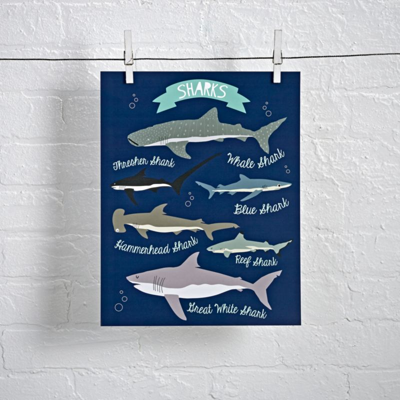 Shark Species Poster Reviews Crate And Barrel