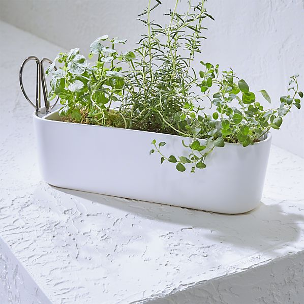 Herb Planter with Scissors