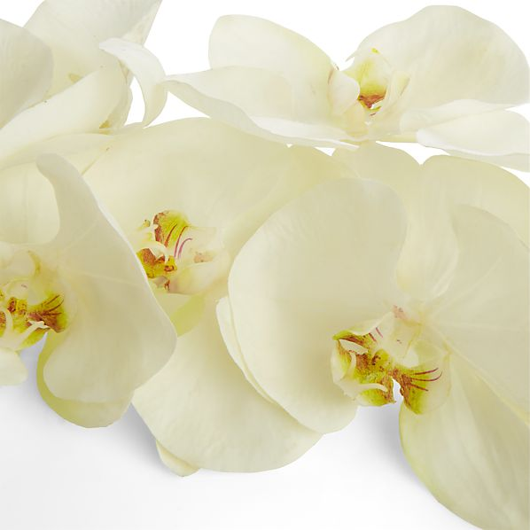 WhiteOrchidStemS17