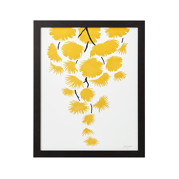YellowMimosaS17