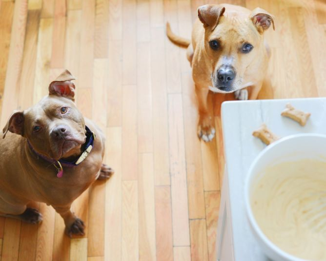 Dogs ice cream